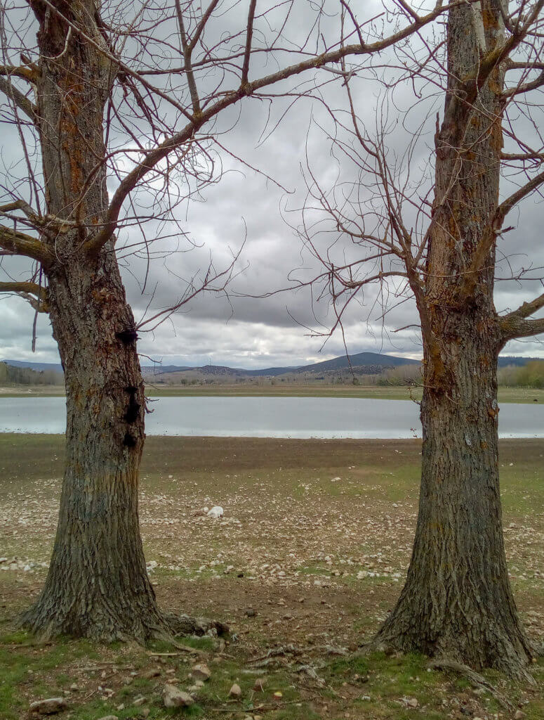 two trees and a lake in background