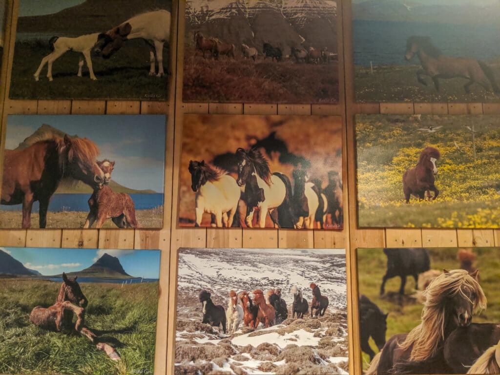 horse photography at Gauksmýri Lodge