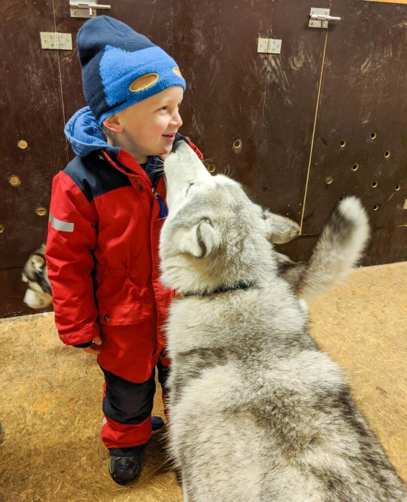 kiss from a husky at Snow Dogs