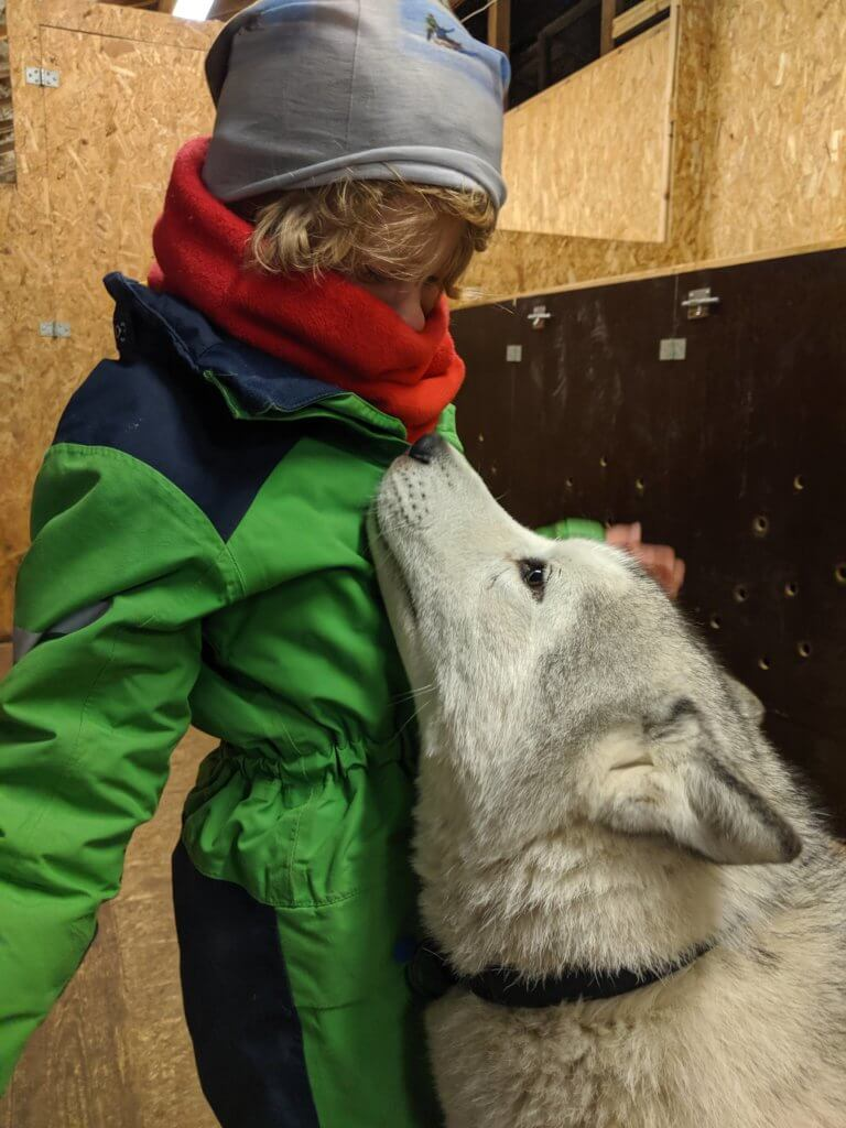 hug from a husky at Snow Dogs